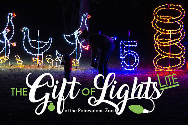 adorable child delighted to see the twelve days of christmas lights